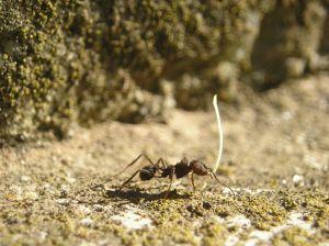 Domácí mraveniště